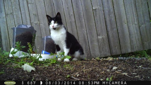 Have you seen this cat and her kittens? Alexandria MN