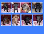 Puppies Alexandria MN