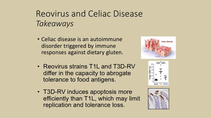 A New Viral Trigger for Celiac Disease   UPMC