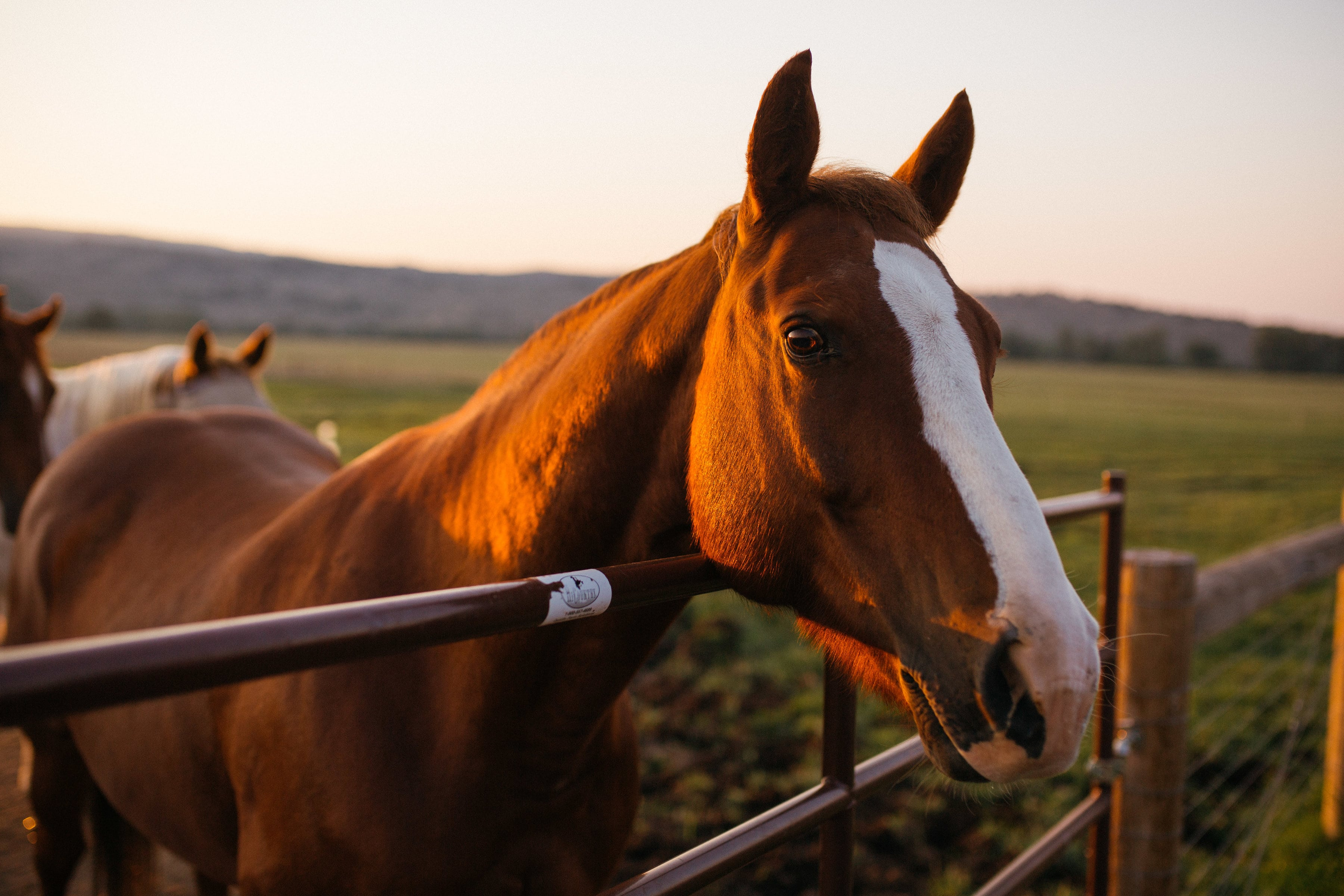 A fabulous horse at Brush Creek Luxury Ranch