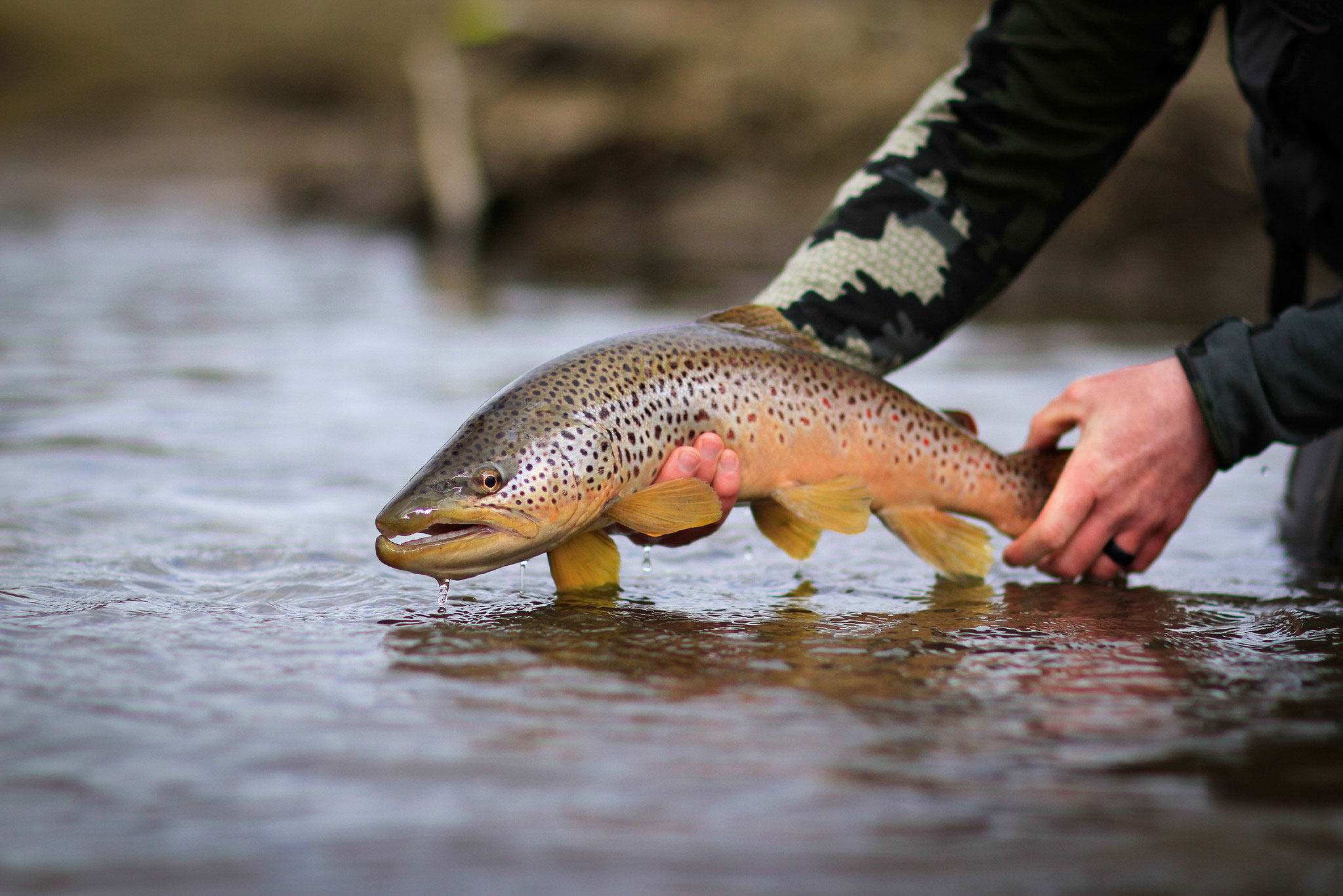 Man holding fresh trout capture above water