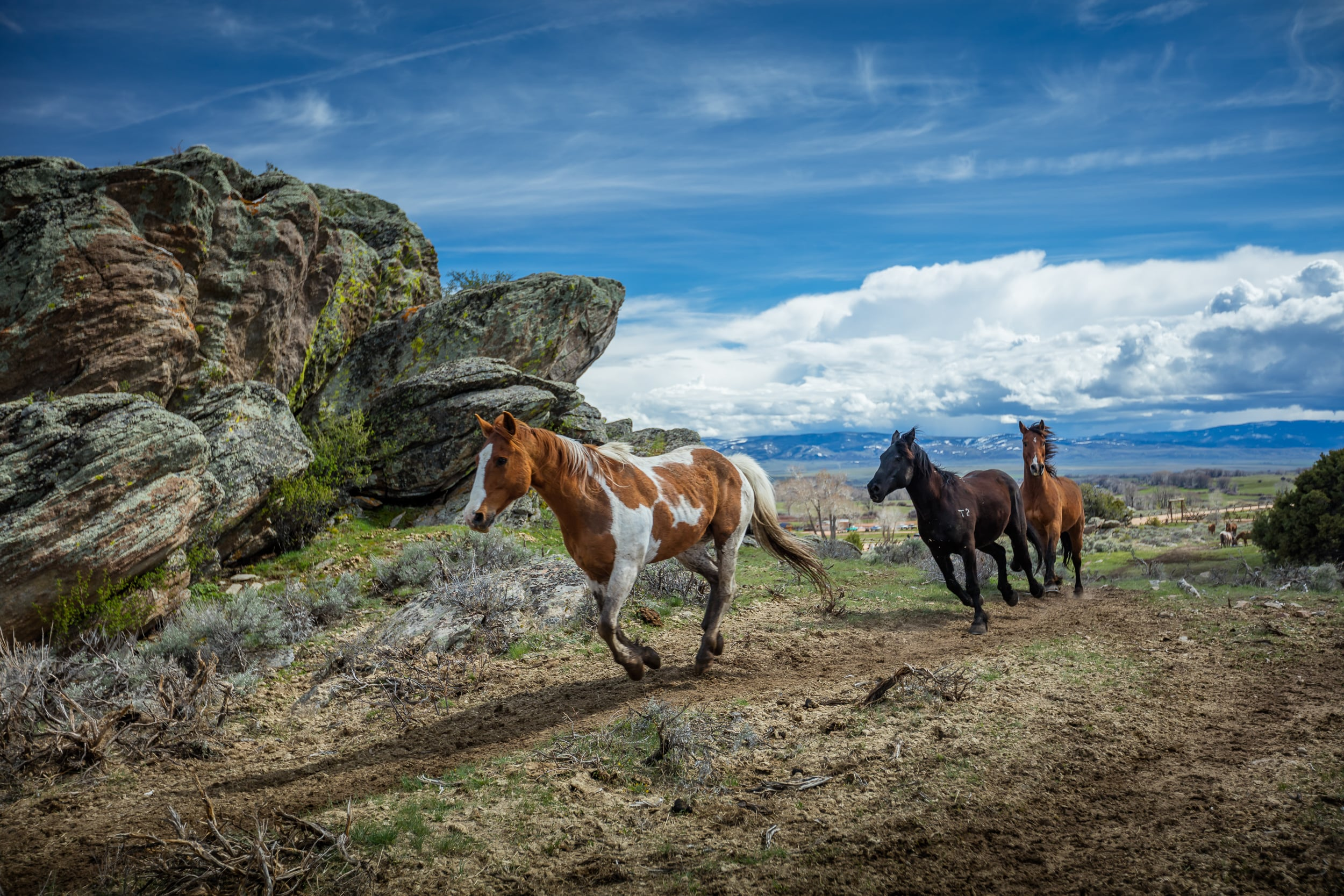 Three horse galloping around the 30,000 acre ranch at Brush Creek Ranch