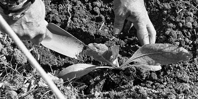 Coco Peat is definitely a magic potion for your plants.