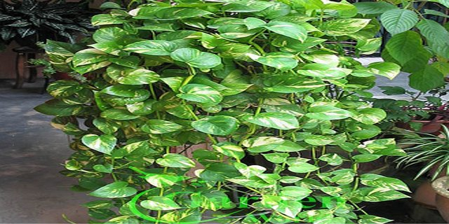 Worried about delhi smog these 3 plants will help purify for Pollution fighting plants