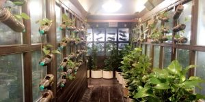 Over 5000 Plants Used To Generate Fresh Oxygen