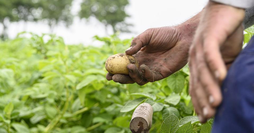 Korean biotech startup E Green Global (EGG) raises $9.2M to scale seed potato production | BEAMSTART News