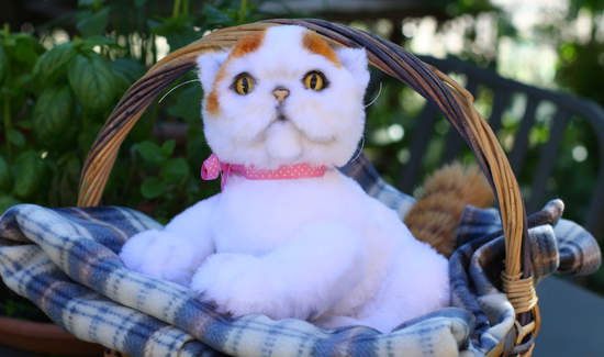 Exotic Shorthair Cat Quo By Patrycja Kochelak Bear Pile