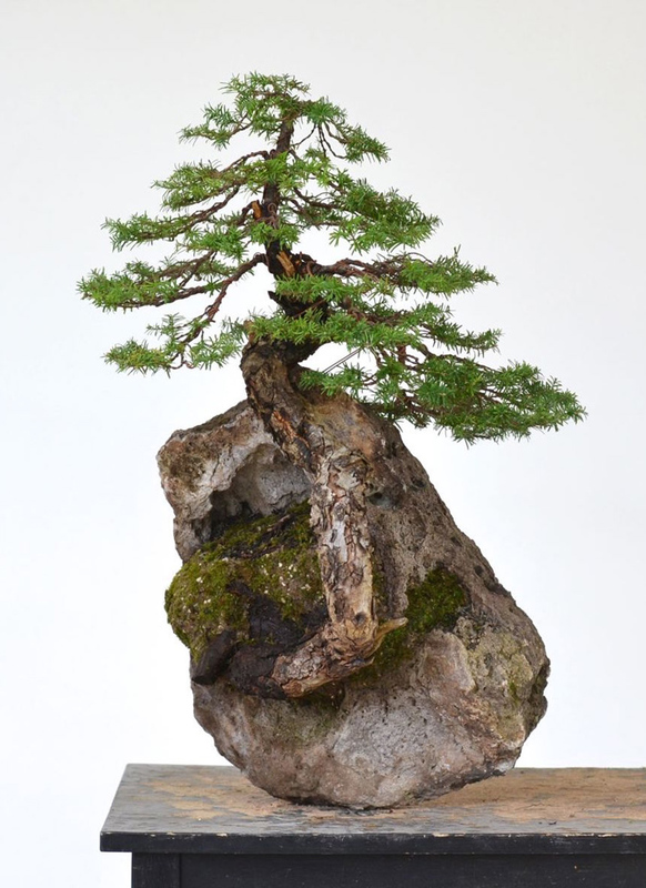 10 exceptionally beautiful gifts for beautiful moms now for Unusual bonsai creations