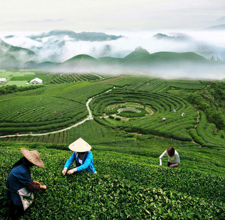 there are several tea villages in this region  including
