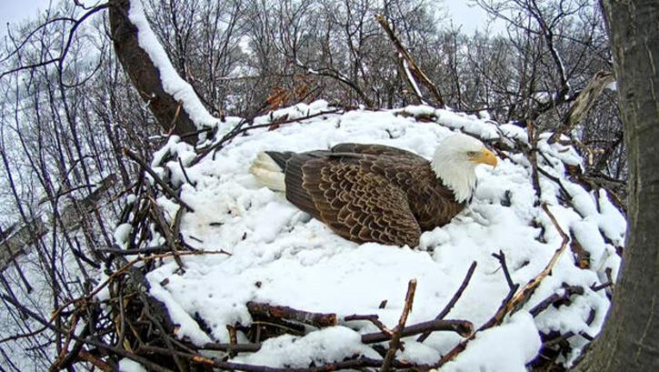 WATCH EGGS HATCHING NEW BEAUTIFUL BIRDS NOW! | BeautifulNow