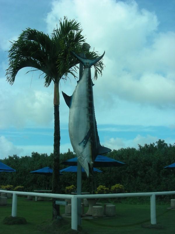 Do dolphin take marlin?