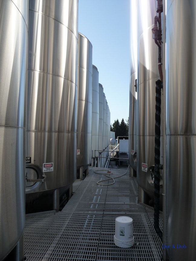 A stroll between rows of outdoor fermentation tanks