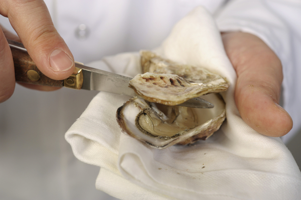 ostend basin, ostendaise oyster, ostend, oysters