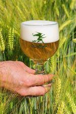 Quintine, Belgian beer, beer in Belgium
