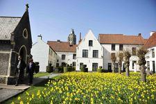 Oudenaard Begijnhof, Daffodils