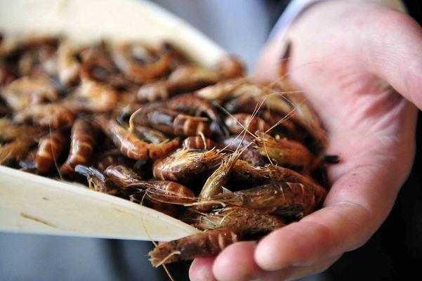 Shrimps-6_1024x681