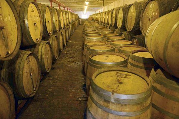 Timmermans cellar