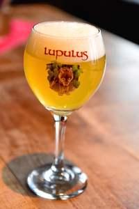 Lupulus Blond, Lupulus