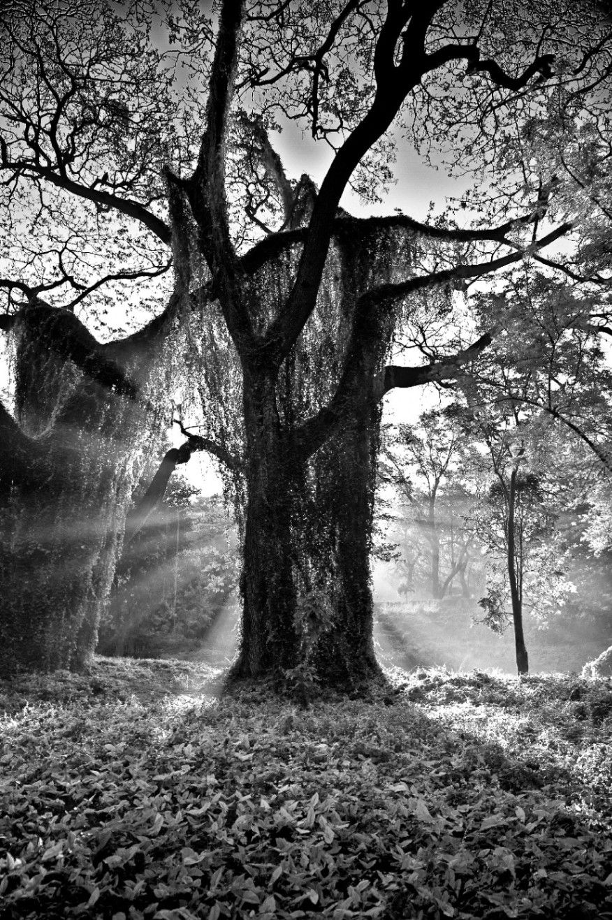 Obra: El Rey del Bosque