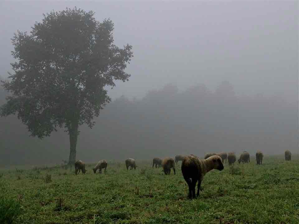 Obra: Neblina