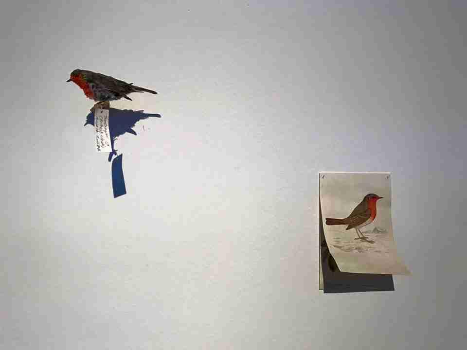 Obra: Matar un pájaro es romper una escalera, o La sangre de Cristo en el pecho del Txantxangorri, o Ideas sobre endemismo, desplazamiento, hibridación, taxonomía y etimología.