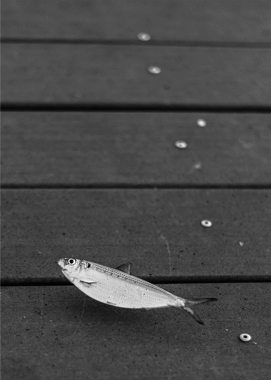 Obra: Nadar en seco