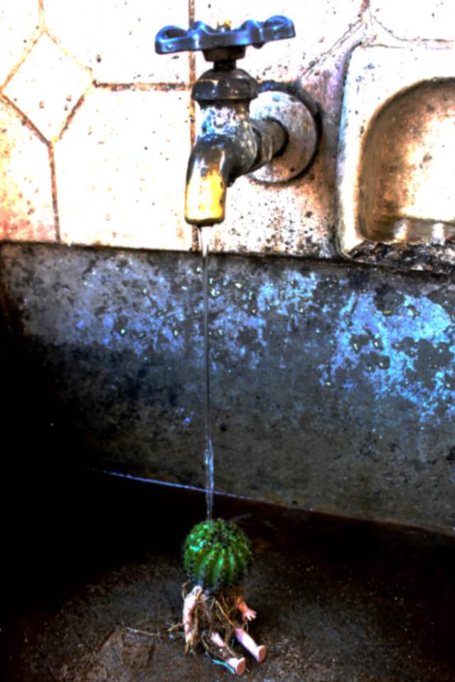 Obra: Proyecto Echinopsis