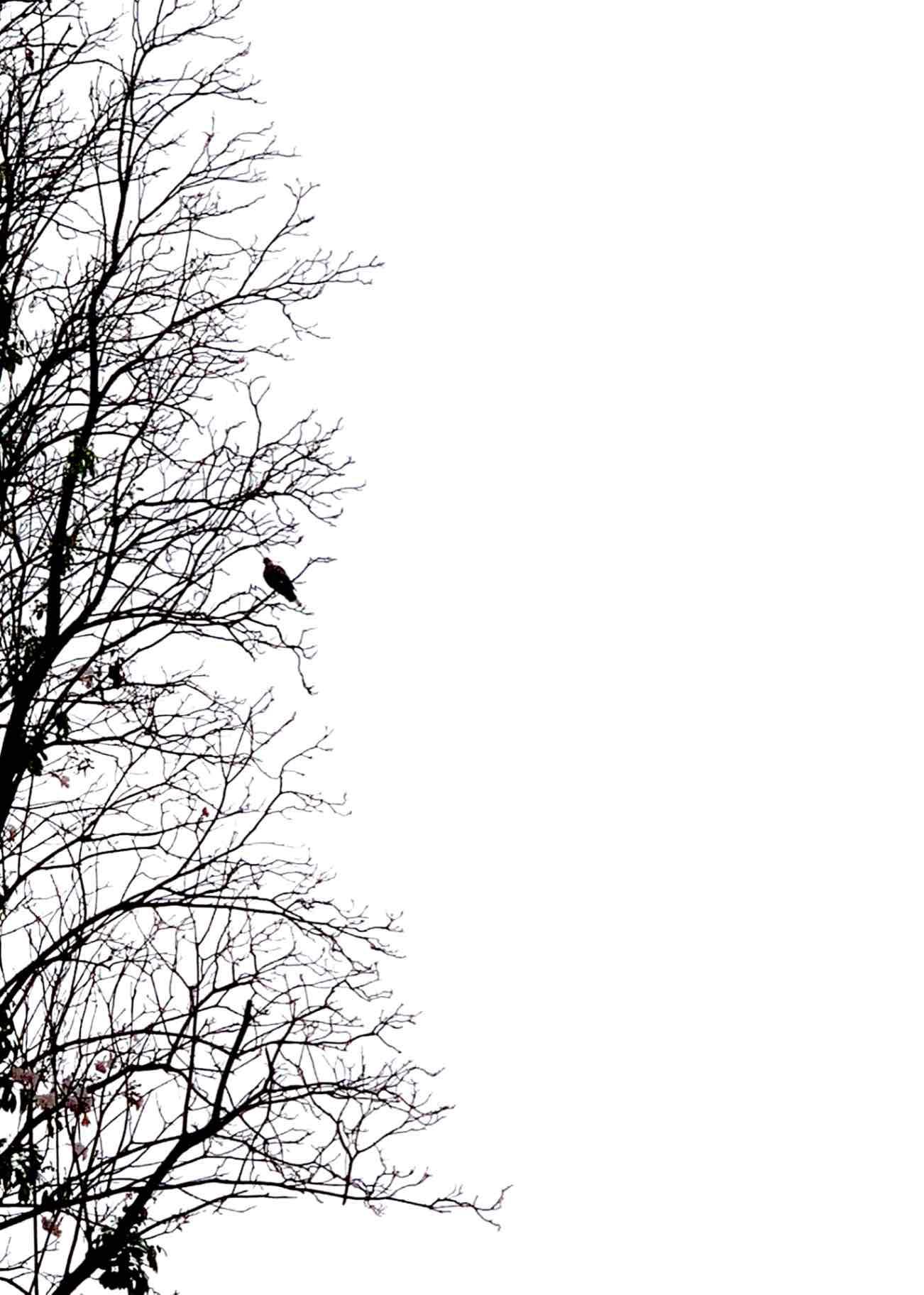 Obra: El cuervo dijo nunca más.