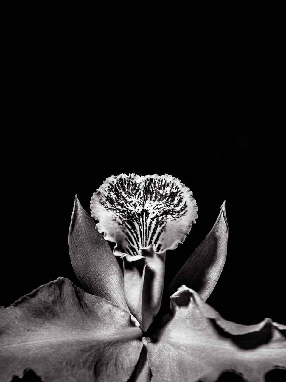 Obra: Test de Rorschach