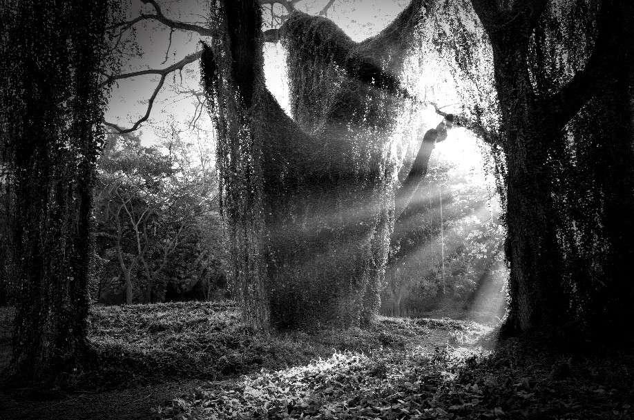 Obra: Huyen los monstruos de la noche