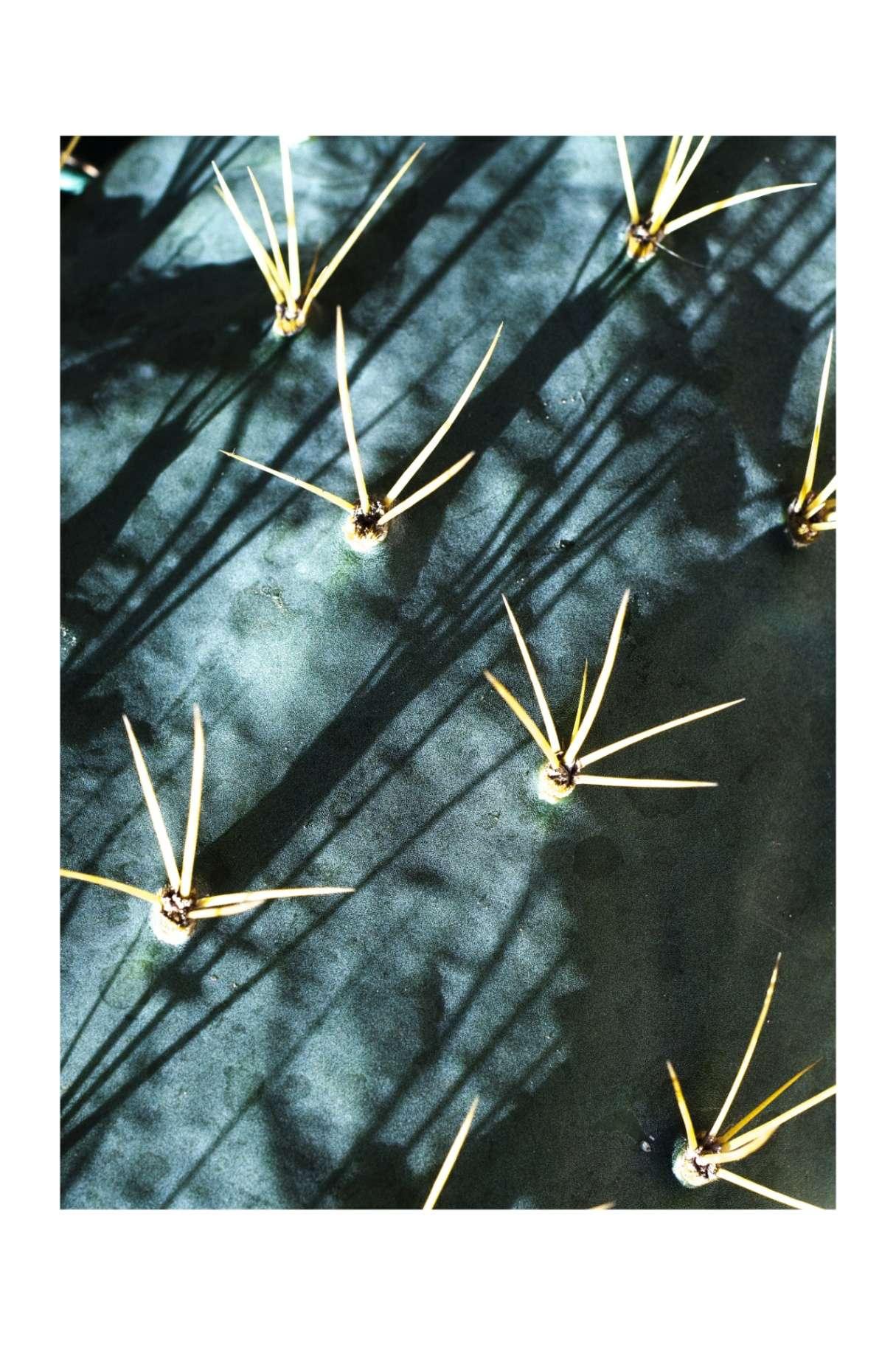 Obra: Jugo y espinas de la serie Sobrevivientes.