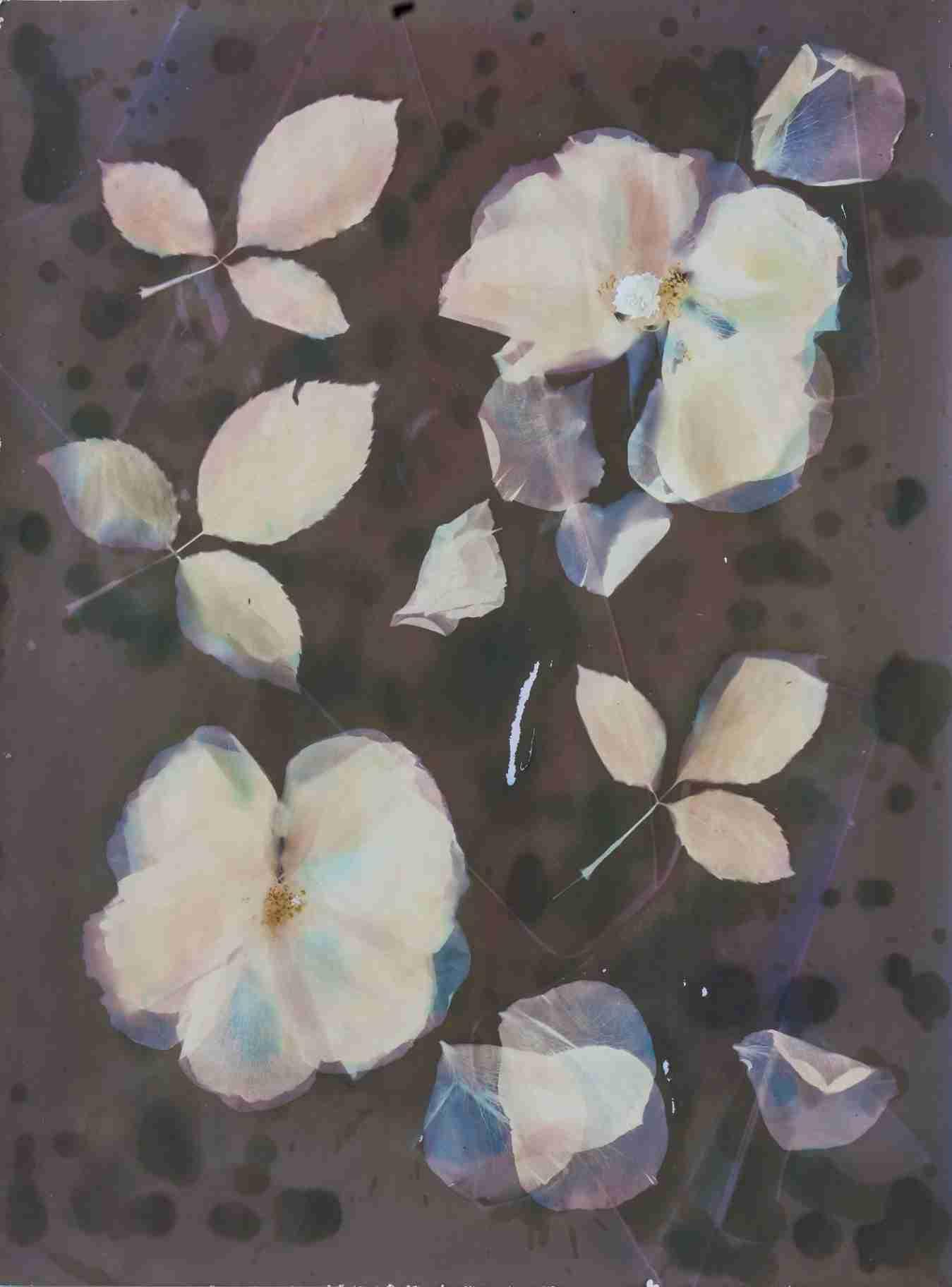 Obra: Rosa grandiflora