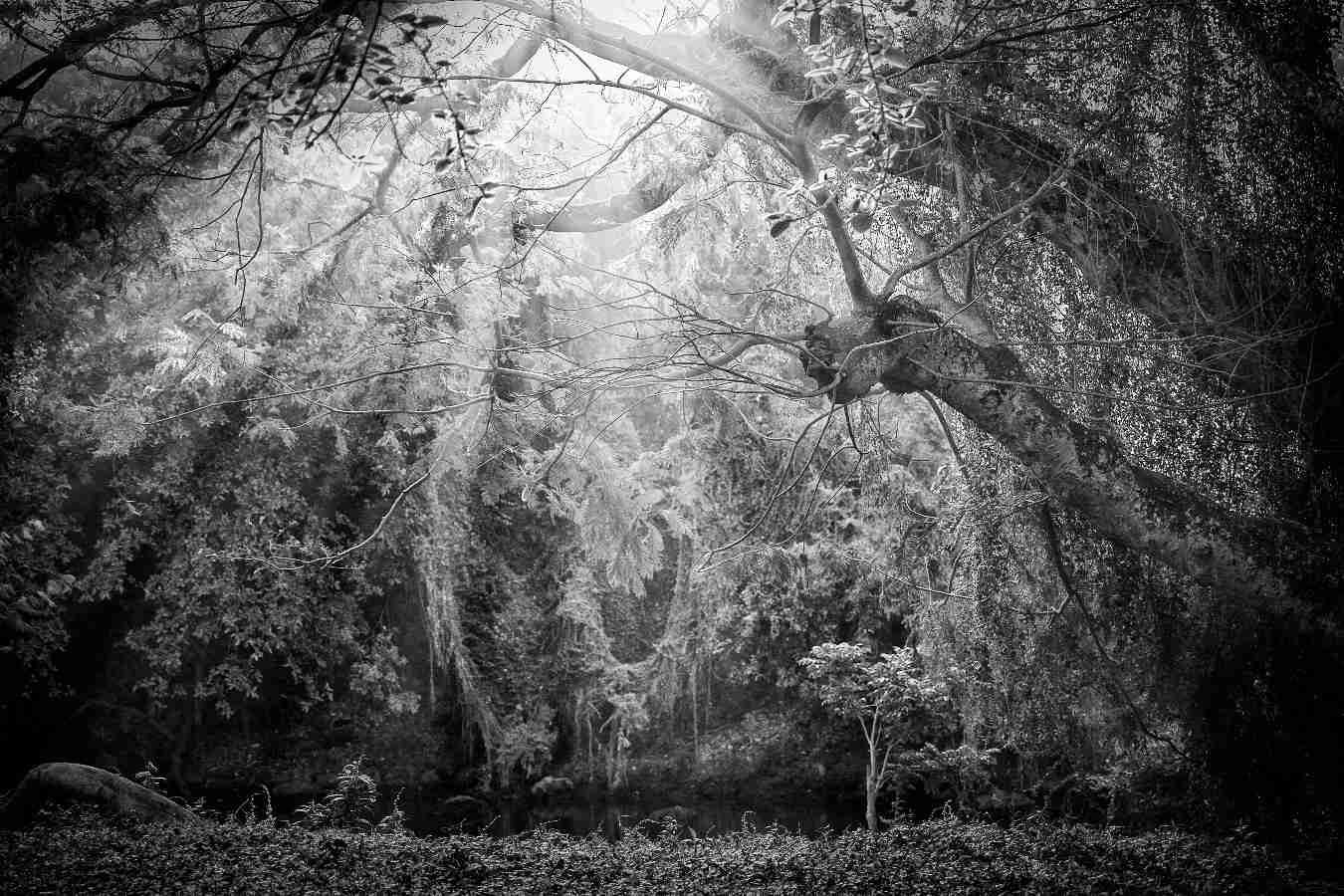 Obra: Noche de Brujas