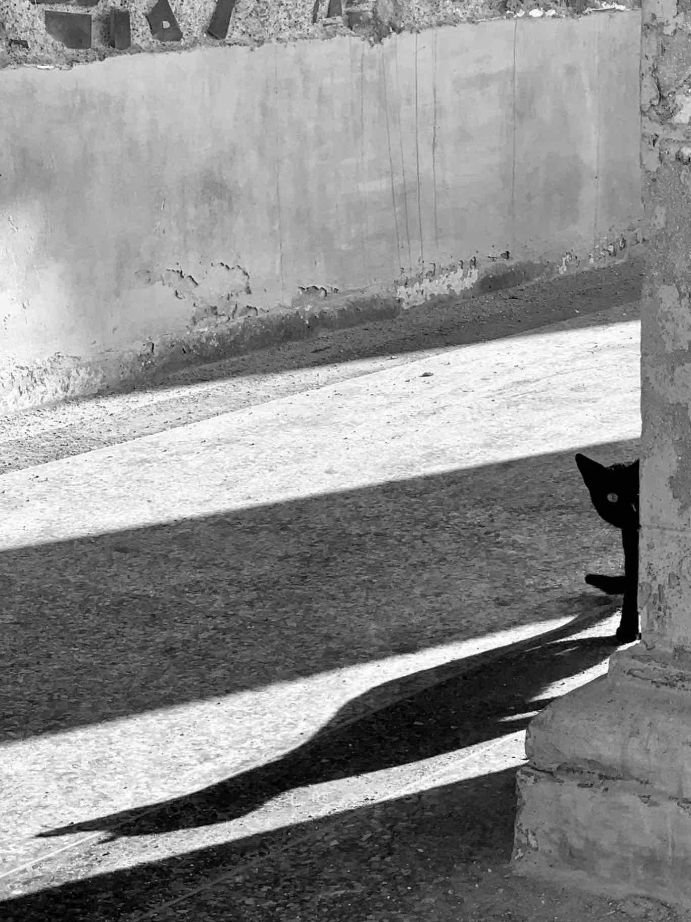 Obra: A los ojos de Los Gatos, todas las cosas pertenecen a Los Gatos.