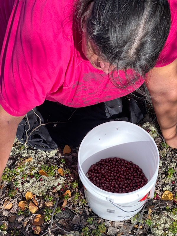 Woman with a bucket collecting berries