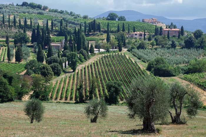 Montalcino Landscape, Tuscany