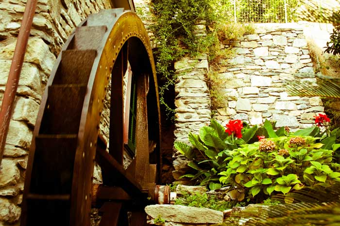 Water Wheel in Sweet Corniglia
