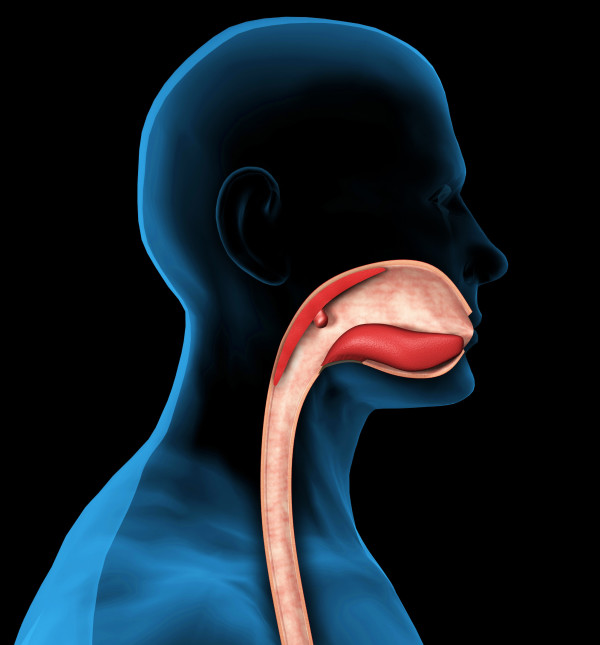 The Mouth Pharynx And Esophagus Manual Guide