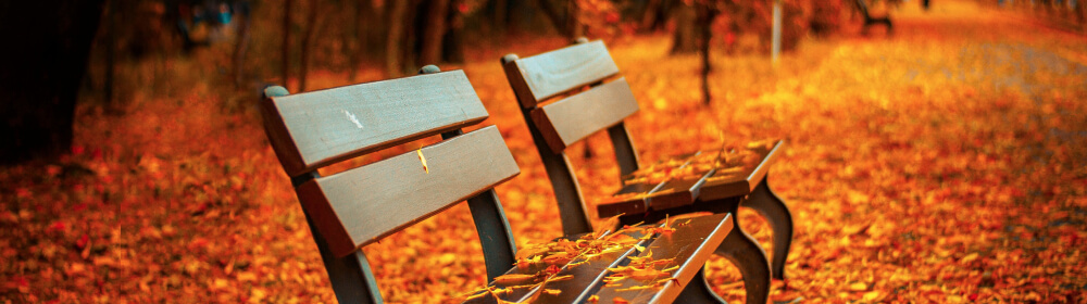 Two park benches. The ground and the benches are covered in orange fall leaves.