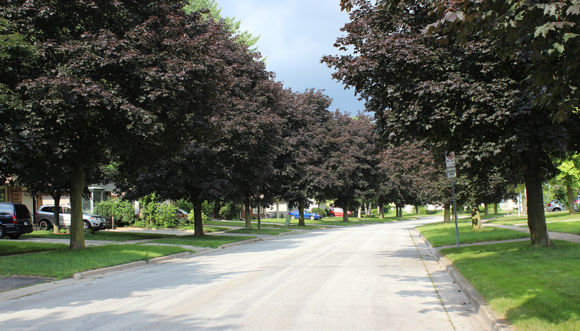 Streets lined with mature trees offering a canopy to modest, post-war suburban homes