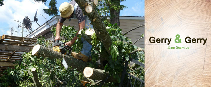 Gerry & Gerry Tree Service Offers Tree Trimming Services in Round Rock, TX