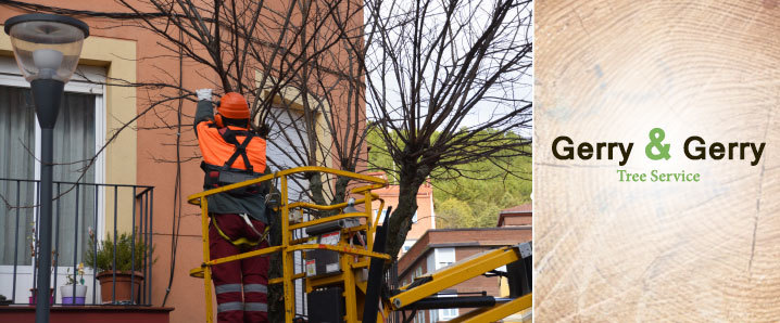 Gerry & Gerry Tree Service Offers Commercial Tree Service in Round Rock, TX