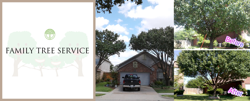 Family Tree Service offers Tree Trimming & Maintenance in Lewisville, TX