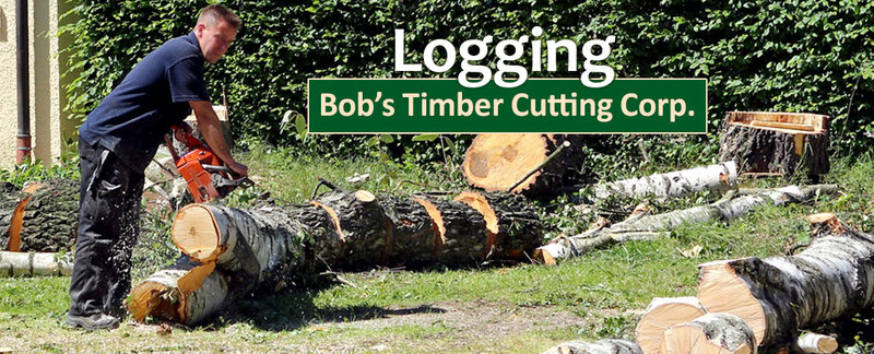 Bob's Timber Cutting Corp. Offers Logging Service in Oregon City, OR