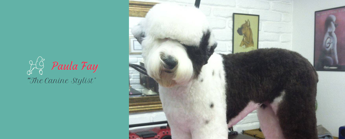 dog groomers albuquerque