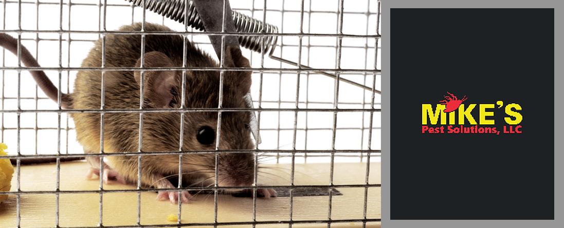 Rodent/Wildlife Control