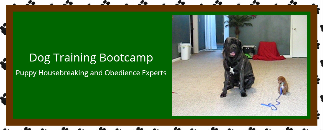 Home Guard Training & Guard Dog Refresher Courses