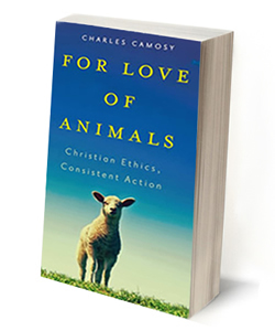 Catholic Social Teaching and Animal Rights