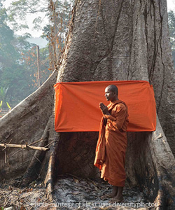 Buddhism and Forest Conservation in Southeast Asia