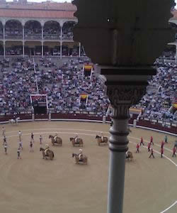 To Torear or Not to Torear? Running with the Bulls in Spain